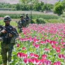 OPI_Army Patrols Poppy Fields