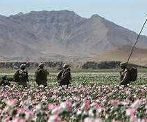 OPI_NATO PAtrols the Fields